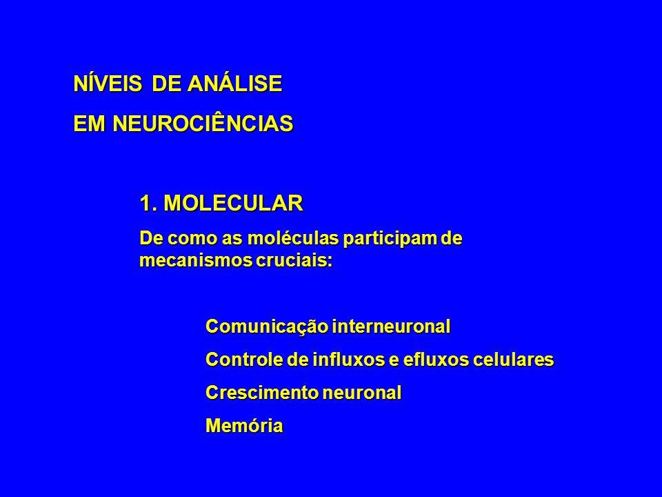 NÍVEIS DE ANÁLISE EM NEUROCIÊNCIAS 1. MOLECULAR De como as moléculas participam de mecanismos cruciais: Comunicação interneuronal Controle de influxos
