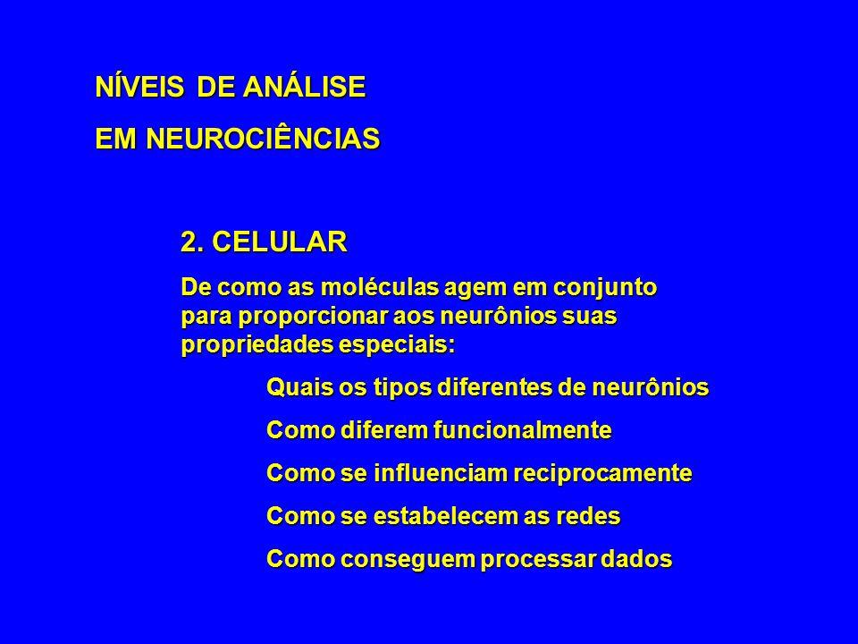 NÍVEIS DE ANÁLISE EM NEUROCIÊNCIAS 2. CELULAR De como as moléculas agem em conjunto para proporcionar aos neurônios suas propriedades especiais: Quais