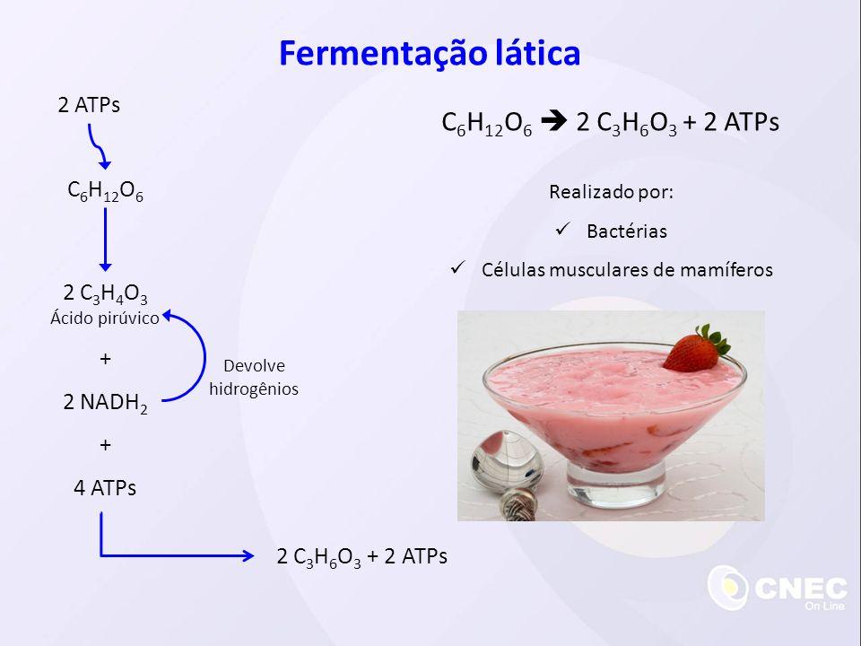C 6 H 12 O 6 2 ATPs 2 C 3 H 4 O 3 Ácido pirúvico 2 NADH 2 4 ATPs + + 2 C 3 H 6 O 3 + 2 ATPs Devolve hidrogênios Fermentação lática C 6 H 12 O 6 2 C 3