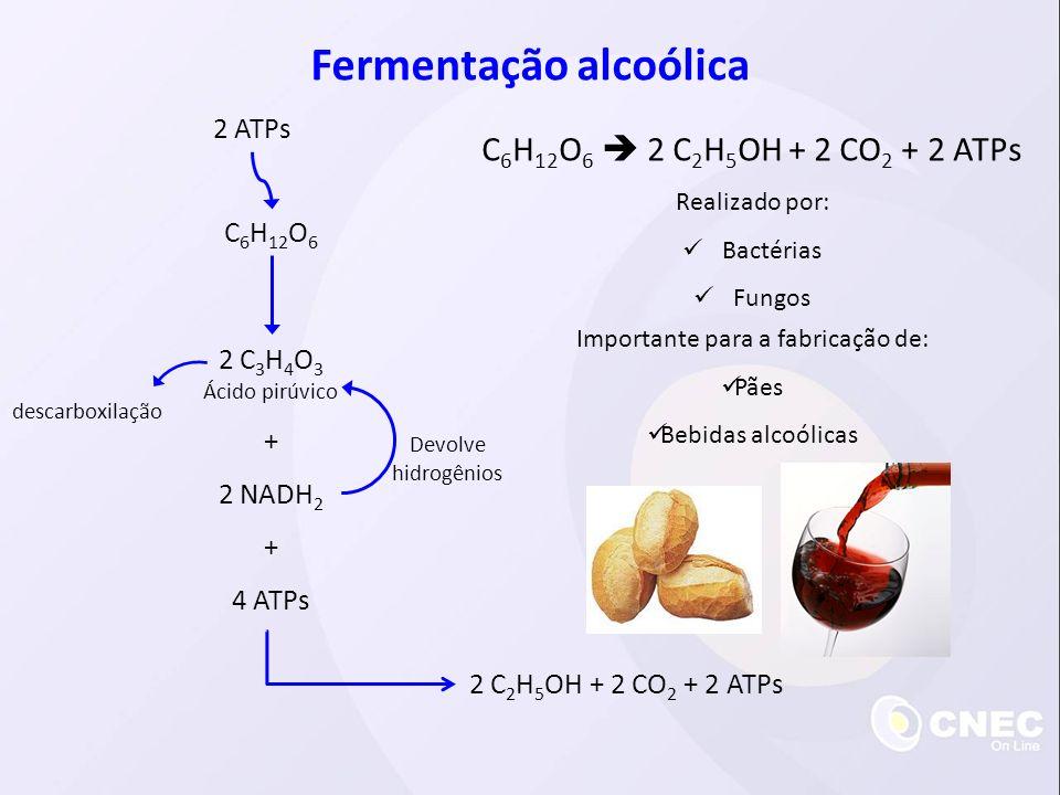 C 6 H 12 O 6 2 ATPs 2 C 3 H 4 O 3 Ácido pirúvico 2 NADH 2 4 ATPs + + 2 C 2 H 5 OH + 2 CO 2 + 2 ATPs Devolve hidrogênios Fermentação alcoólica C 6 H 12