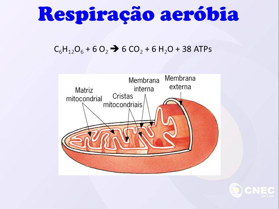 C 6 H 12 O 6 + 6 O 2 6 CO 2 + 6 H 2 O + 38 ATPs Respiração aeróbia