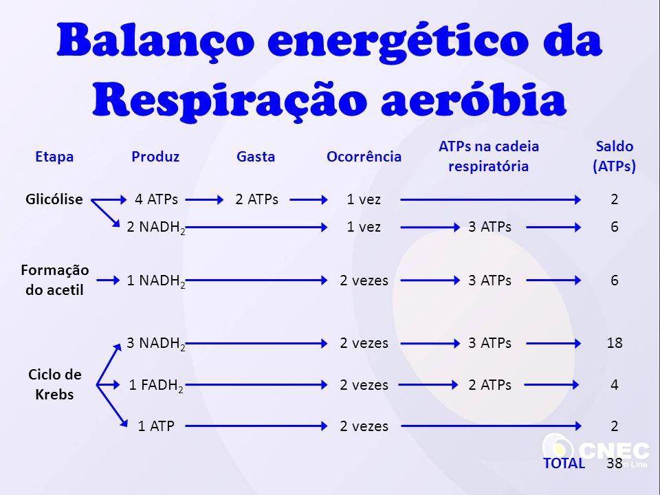 EtapaProduzGastaOcorrência ATPs na cadeia respiratória Saldo (ATPs) Glicólise Formação do acetil Ciclo de Krebs 4 ATPs2 ATPs2 1 NADH 2 2 vezes3 ATPs 3