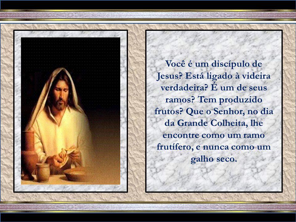 Nisto é glorificado meu Pai, em que deis muito fruto, e assim vos tornareis meus discípulos. (João 15: 1-8)