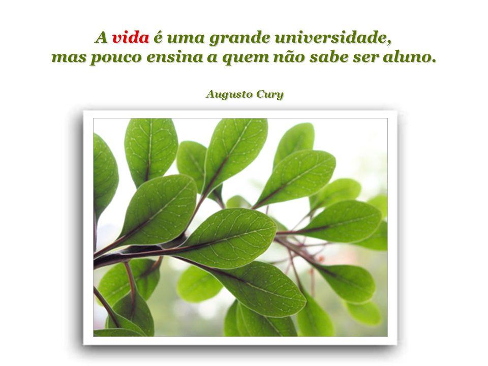 A vida é uma grande universidade, mas pouco ensina a quem não sabe ser aluno. Augusto Cury