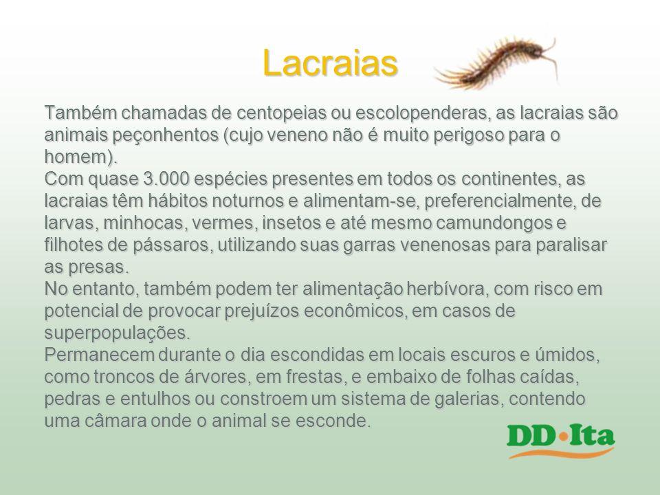 Lacraias Também chamadas de centopeias ou escolopenderas, as lacraias são animais peçonhentos (cujo veneno não é muito perigoso para o homem). Com qua