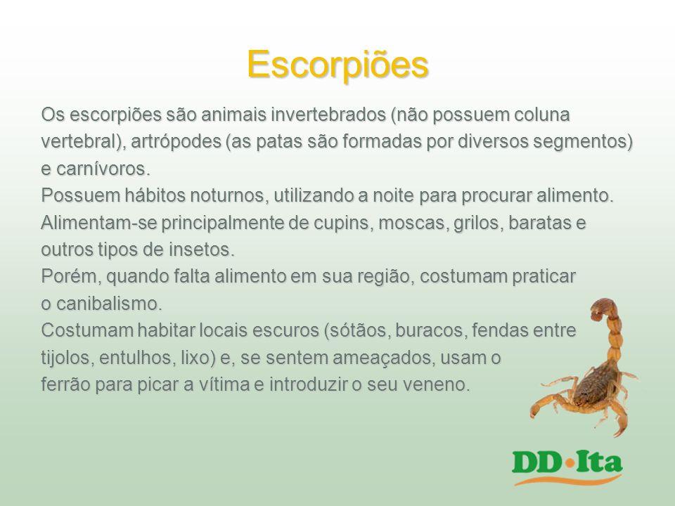 Escorpiões Os escorpiões são animais invertebrados (não possuem coluna vertebral), artrópodes (as patas são formadas por diversos segmentos) e carnívo