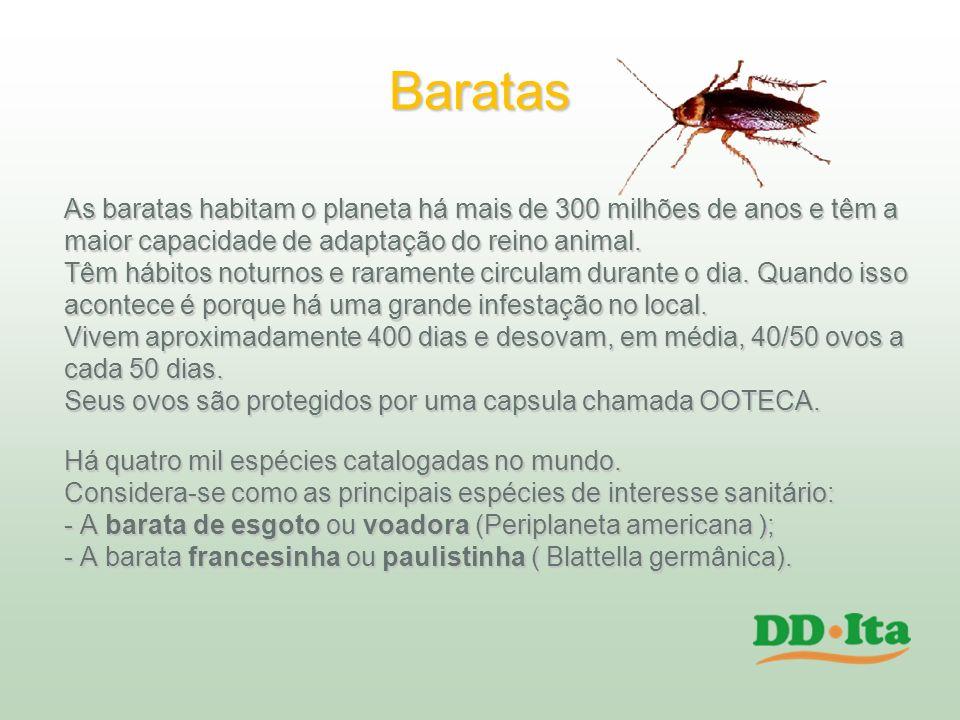 Baratas As baratas habitam o planeta há mais de 300 milhões de anos e têm a maior capacidade de adaptação do reino animal. Têm hábitos noturnos e rara