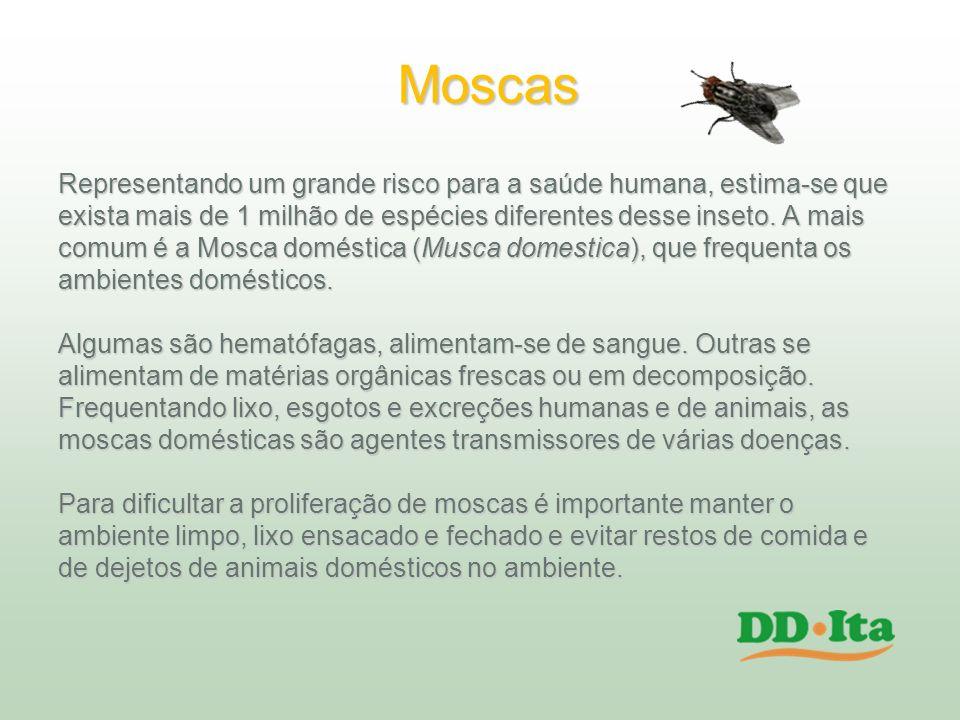 Moscas Representando um grande risco para a saúde humana, estima-se que exista mais de 1 milhão de espécies diferentes desse inseto. A mais comum é a