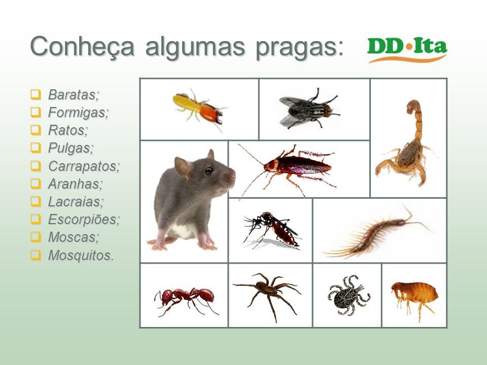 Conheça algumas pragas Conheça algumas pragas: Baratas; Baratas; Formigas; Formigas; Ratos; Ratos; Pulgas; Pulgas; Carrapatos; Carrapatos; Aranhas; Ar