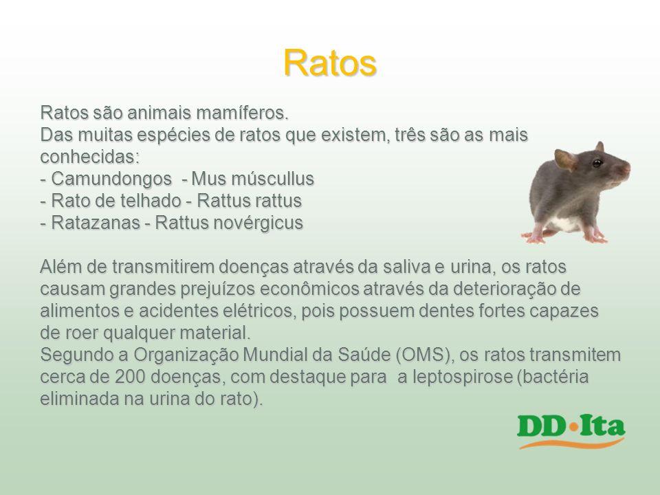 Ratos Ratos são animais mamíferos. Das muitas espécies de ratos que existem, três são as mais conhecidas: - Camundongos - Mus múscullus - Rato de telh