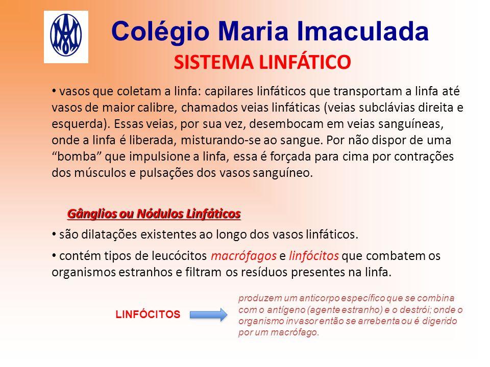 Colégio Maria Imaculada SISTEMA LINFÁTICO vasos que coletam a linfa: capilares linfáticos que transportam a linfa até vasos de maior calibre, chamados
