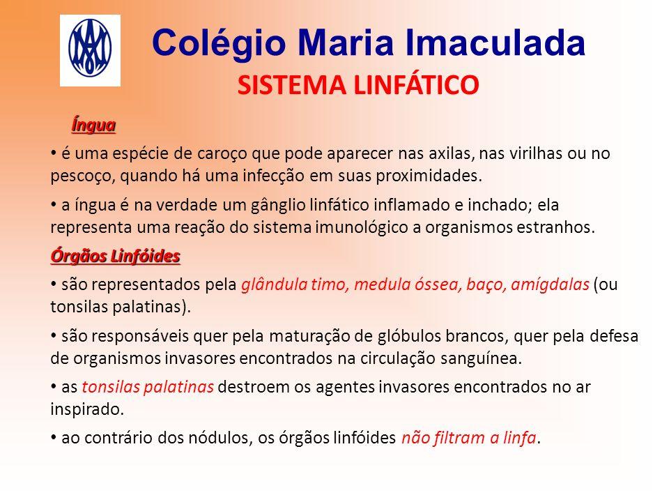 Colégio Maria Imaculada SISTEMA LINFÁTICO Íngua é uma espécie de caroço que pode aparecer nas axilas, nas virilhas ou no pescoço, quando há uma infecç