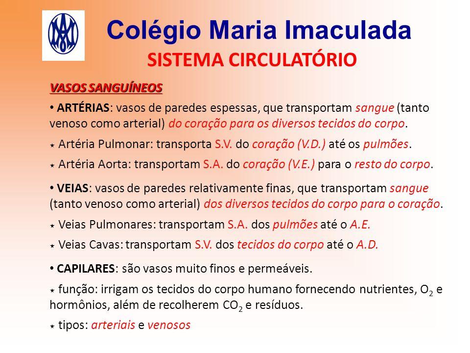 Colégio Maria Imaculada SISTEMA CIRCULATÓRIO VASOS SANGUÍNEOS ARTÉRIAS: vasos de paredes espessas, que transportam sangue (tanto venoso como arterial)
