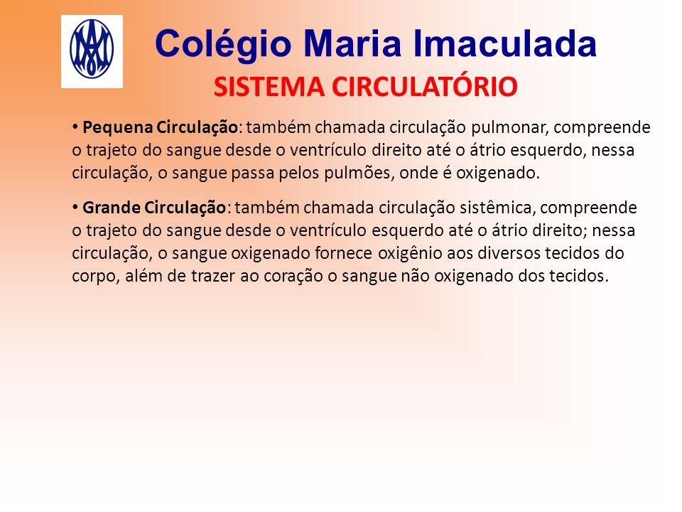 Colégio Maria Imaculada SISTEMA CIRCULATÓRIO Pequena Circulação: também chamada circulação pulmonar, compreende o trajeto do sangue desde o ventrículo