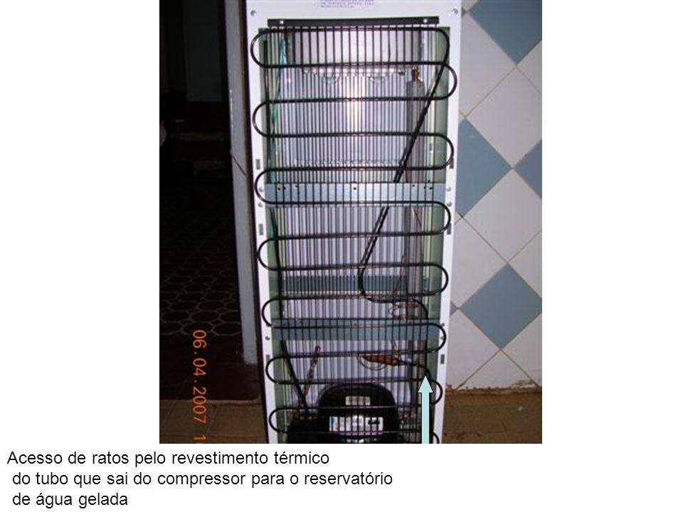 Acesso de ratos pelo revestimento térmico do tubo que sai do compressor para o reservatório de água gelada