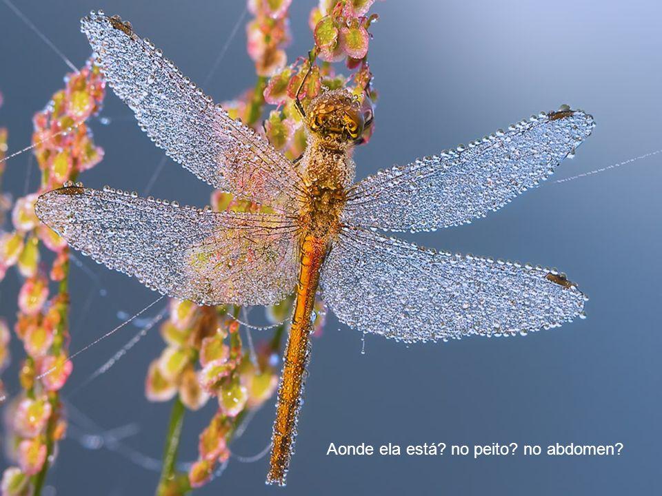 O ar é de graça e nos conecta com o universo...