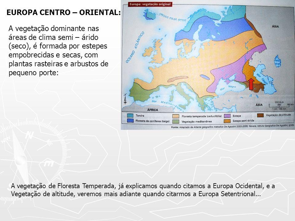 EUROPA CENTRO – ORIENTAL: A vegetação dominante nas áreas de clima semi – árido (seco), é formada por estepes empobrecidas e secas, com plantas rastei
