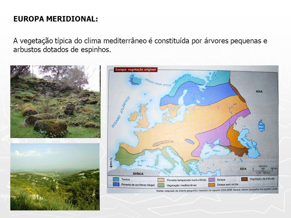 EUROPA MERIDIONAL: A vegetação típica do clima mediterrâneo é constituída por árvores pequenas e arbustos dotados de espinhos.