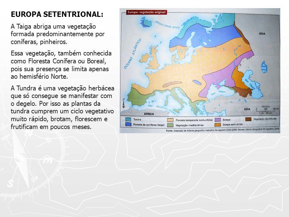 EUROPA SETENTRIONAL: A Taiga abriga uma vegetação formada predominantemente por coníferas, pinheiros. Essa vegetação, também conhecida como Floresta C