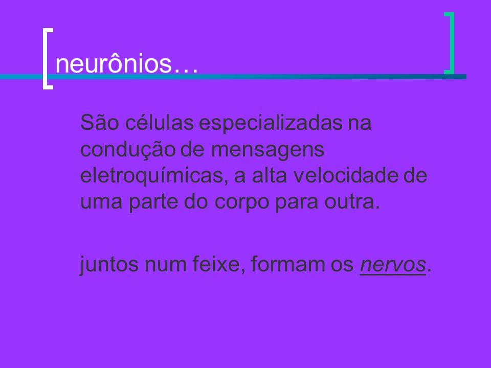 neurônios… São células especializadas na condução de mensagens eletroquímicas, a alta velocidade de uma parte do corpo para outra. juntos num feixe, f