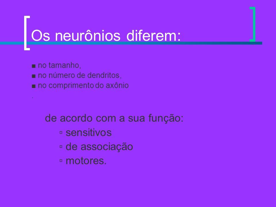Os neurônios diferem: no tamanho, no número de dendritos, no comprimento do axônio. de acordo com a sua função: sensitivos de associação motores.