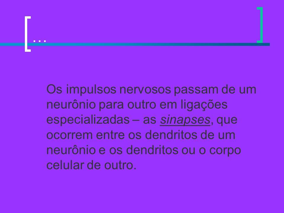 … Os impulsos nervosos passam de um neurônio para outro em ligações especializadas – as sinapses, que ocorrem entre os dendritos de um neurônio e os d