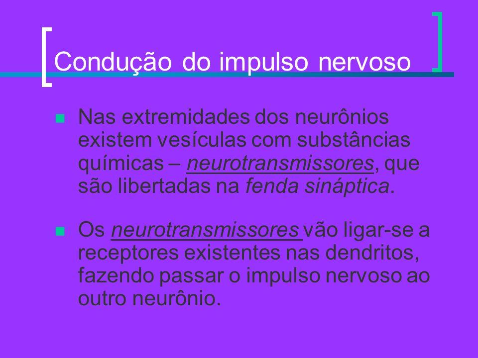 Condução do impulso nervoso Nas extremidades dos neurônios existem vesículas com substâncias químicas – neurotransmissores, que são libertadas na fend