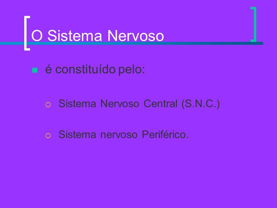 O Sistema Nervoso é constituído pelo: Sistema Nervoso Central (S.N.C.) Sistema nervoso Periférico.