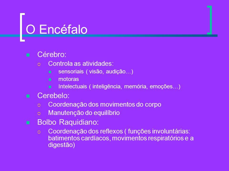 O Encéfalo Cérebro: Controla as atividades: sensoriais ( visão, audição…) motoras Intelectuais ( inteligência, memória, emoções…) Cerebelo: Coordenaçã