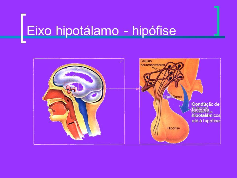 Eixo hipotálamo - hipófise Condução de factores hipotalâmicos até à hipófise