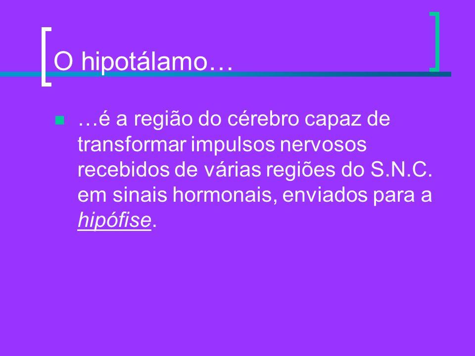 O hipotálamo… …é a região do cérebro capaz de transformar impulsos nervosos recebidos de várias regiões do S.N.C. em sinais hormonais, enviados para a