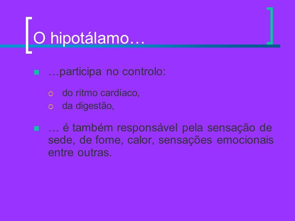O hipotálamo… …participa no controlo: do ritmo cardíaco, da digestão, … é também responsável pela sensação de sede, de fome, calor, sensações emociona
