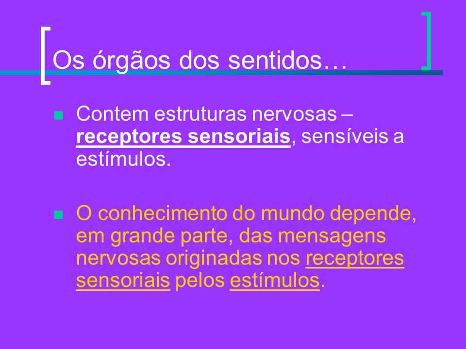 Os órgãos dos sentidos… Contem estruturas nervosas – receptores sensoriais, sensíveis a estímulos. O conhecimento do mundo depende, em grande parte, d