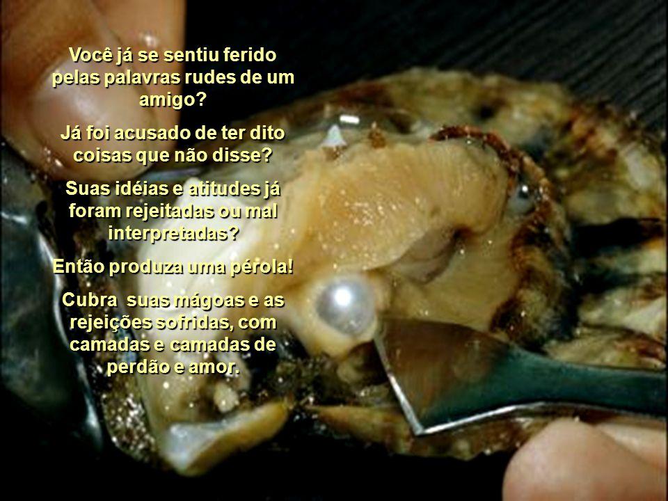 Quando um grão de areia nela penetra, as células do nácar entram em ação e recobrem o grão com várias camadas, para proteger o corpo indefeso da ostra.