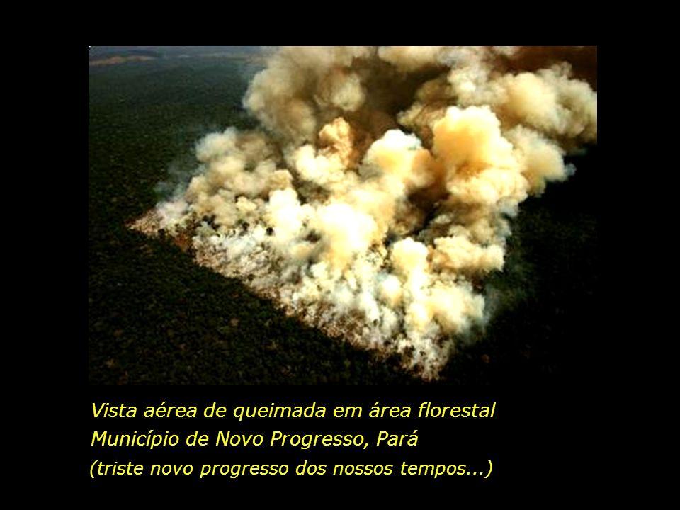 holdemqueen@hotmail.com Desmatamento Devastação Sofrimentos Injustiças... Empresários com sede insaciável de lucro Deputados e Senadores da bancada ru