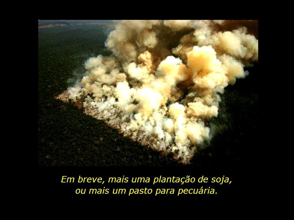 holdemqueen@hotmail.com (triste novo progresso dos nossos tempos...) Vista aérea de queimada em área florestal Município de Novo Progresso, Pará