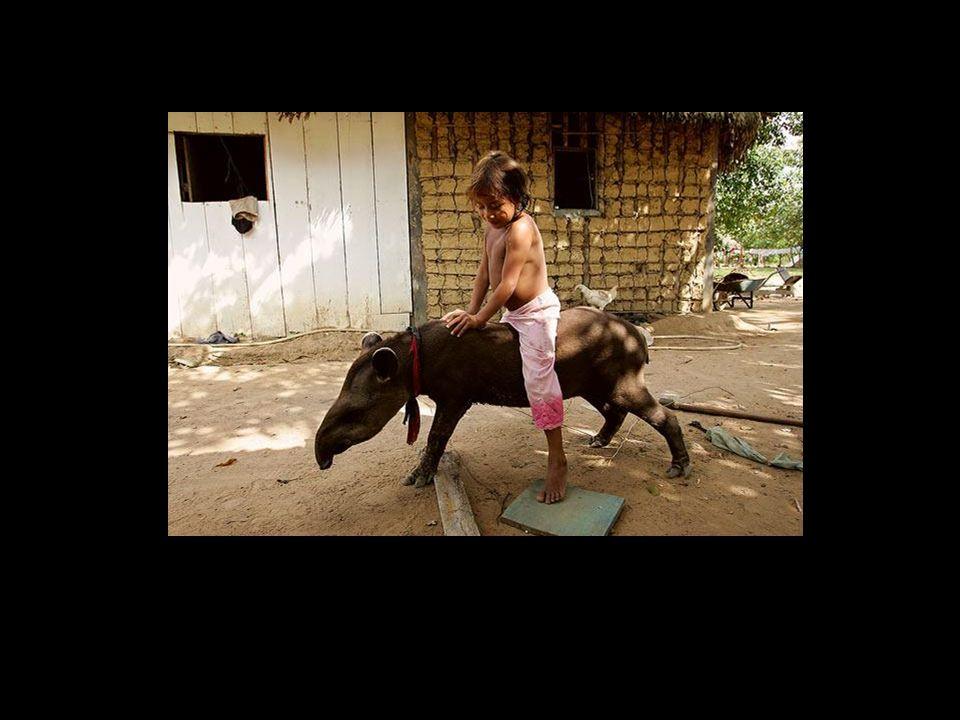 holdemqueen@hotmail.com Os animais adotados pela tribo se tornam intocáveis, jamais sendo mortos, ganhando a condição de bichos de estimação.