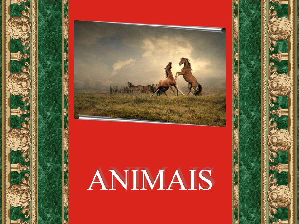 Em nós, seres humanos, há um Espírito que pensa, age, tem livre arbítrio.