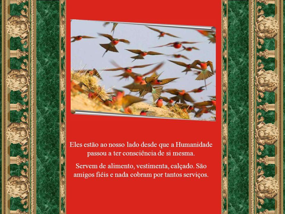 Para finalizarmos este programa, selecionamos trechos do texto Apelo em favor dos animais.
