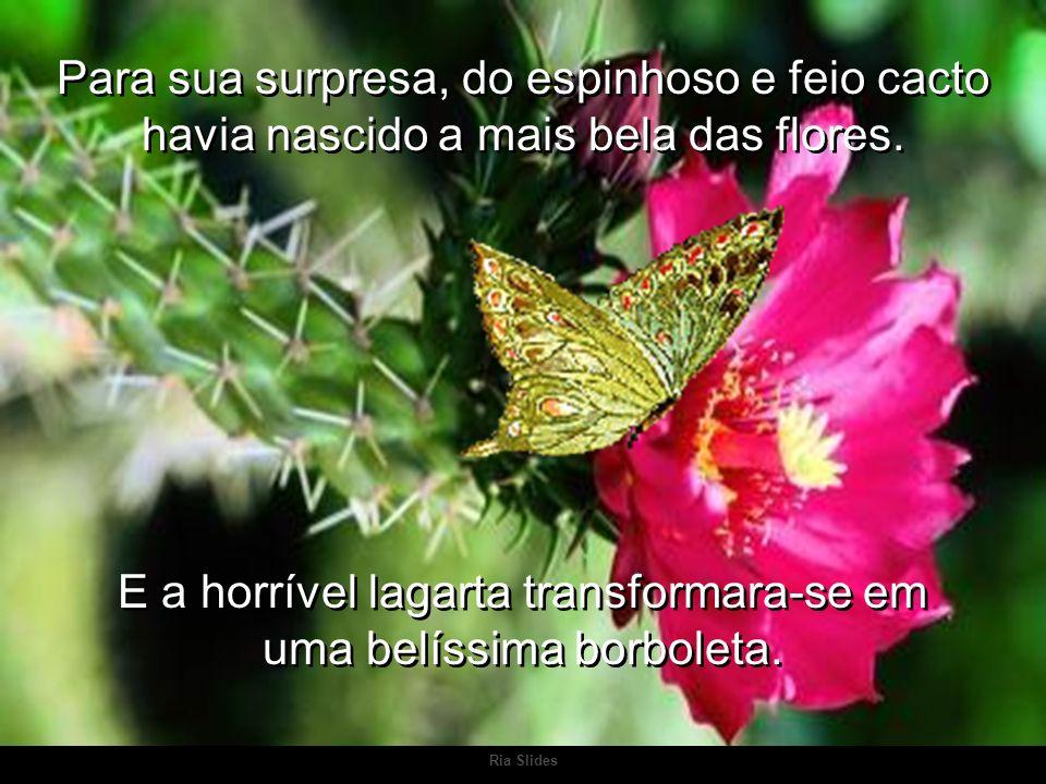 Ria Slides Para sua surpresa, do espinhoso e feio cacto havia nascido a mais bela das flores.