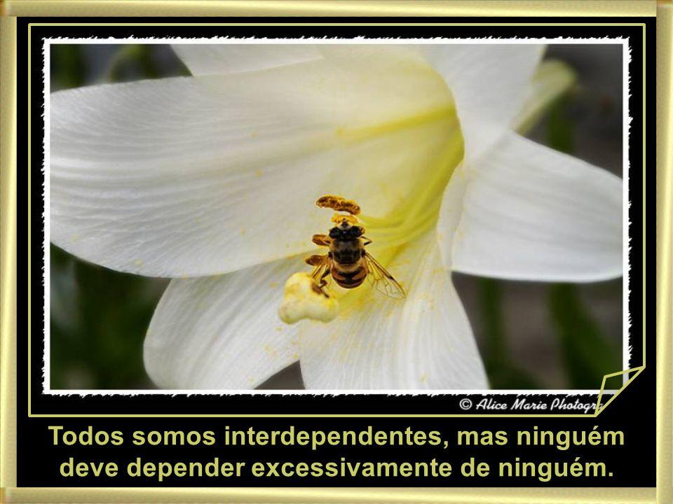 Todos somos interdependentes, mas ninguém deve depender excessivamente de ninguém.