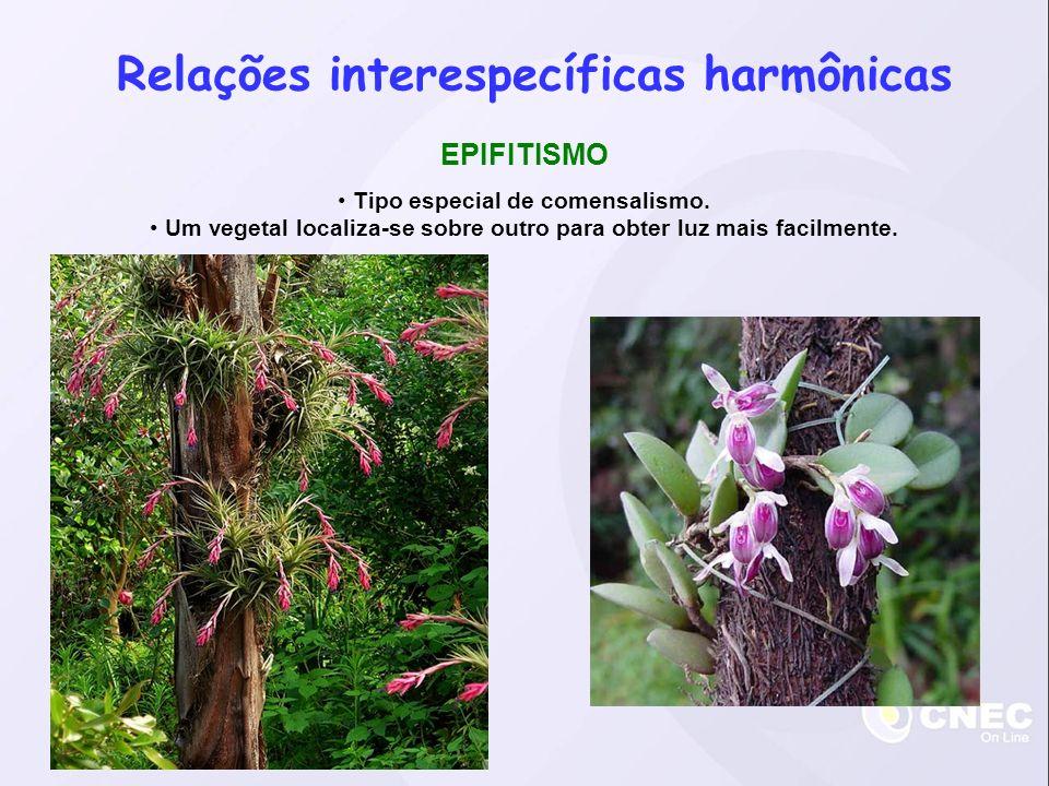 Relações interespecíficas harmônicas EPIFITISMO Tipo especial de comensalismo.