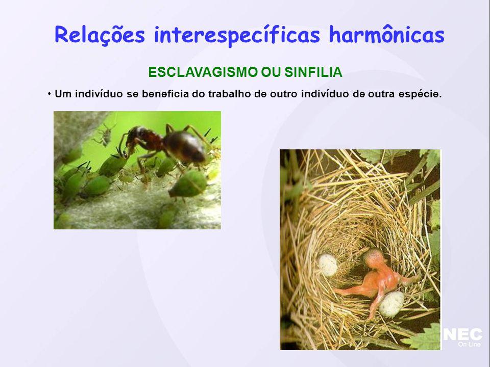 Relações interespecíficas harmônicas ESCLAVAGISMO OU SINFILIA Um indivíduo se beneficia do trabalho de outro indivíduo de outra espécie.