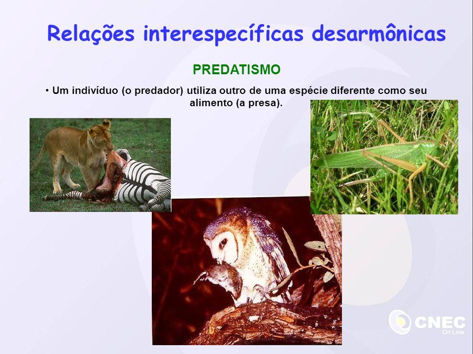 Relações interespecíficas desarmônicas PREDATISMO Um indivíduo (o predador) utiliza outro de uma espécie diferente como seu alimento (a presa).