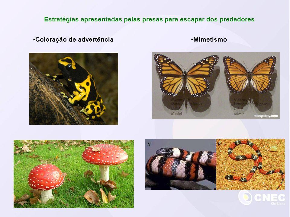 Estratégias apresentadas pelas presas para escapar dos predadores MimetismoColoração de advertência VF