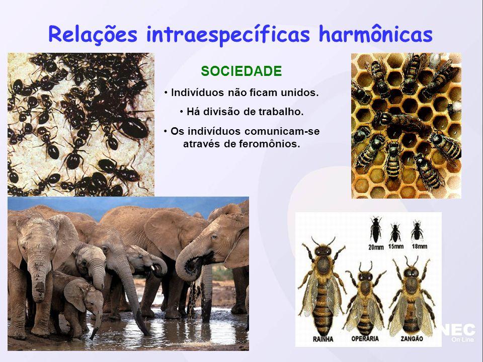 Relações intraespecíficas harmônicas SOCIEDADE Indivíduos não ficam unidos.