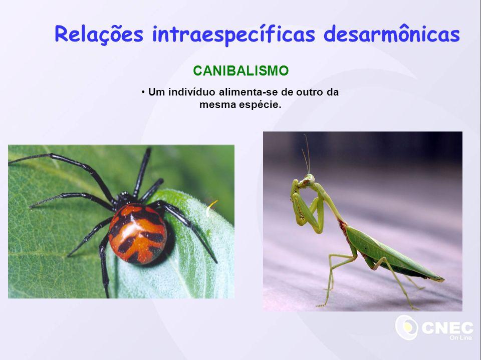 Relações interespecíficas desarmônicas PARASITISMO Um indivíduo (o parasita) vive no corpo de um indivíduo de outra espécie (o hospedeiro), retirando-lhe nutrientes e causando prejuízos.