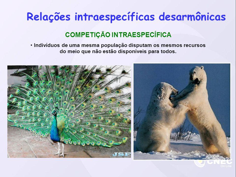 Relações intraespecíficas desarmônicas COMPETIÇÃO INTRAESPECÍFICA Indivíduos de uma mesma população disputam os mesmos recursos do meio que não estão disponíveis para todos.