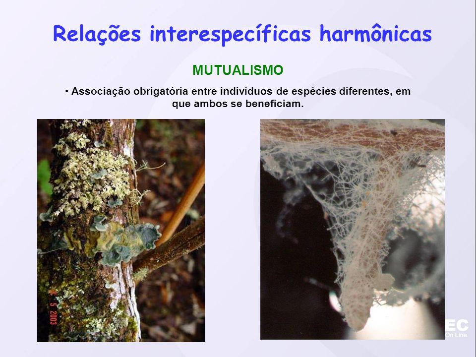 Relações interespecíficas harmônicas PROTOCOOPERAÇÃO Associação facultativa entre indivíduos de espécies diferentes.