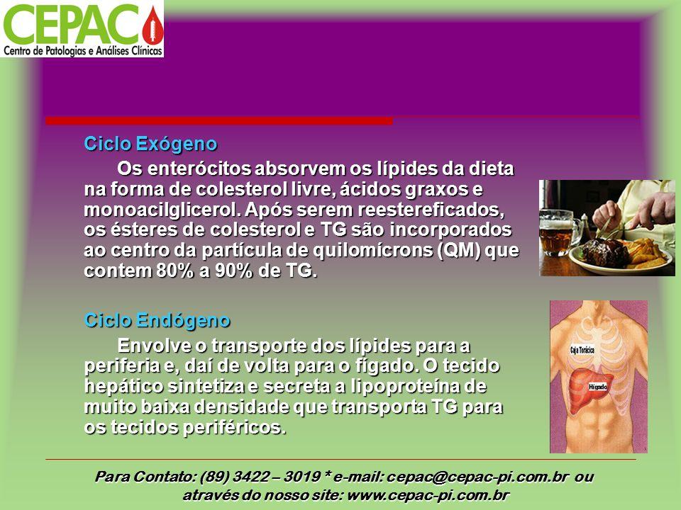 Ciclo Exógeno Os enterócitos absorvem os lípides da dieta na forma de colesterol livre, ácidos graxos e monoacilglicerol. Após serem reestereficados,